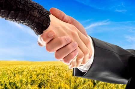 negotiation: Closeup of male and female hand shaking hands over beautiful wheat field. Concept of successful business of a farmer. Stock Photo