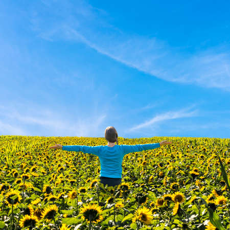 sunflower field: Young woman standing in the middle of sunflower field with arms wide open  Stock Photo