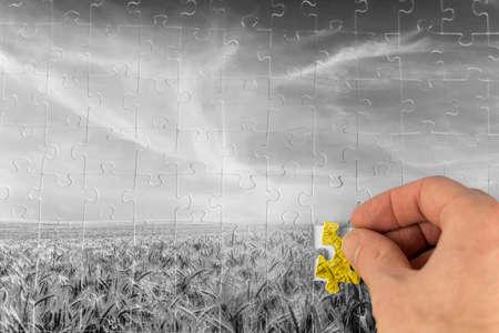 Landschaft Puzzle von einem Graustufen-Weizenfeld mit einer männlichen Hand, die das letzte Stück des Puzzles in Farbe darstellen Problemlösung in der Landwirtschaft und Nachhaltigkeit in der Natur.