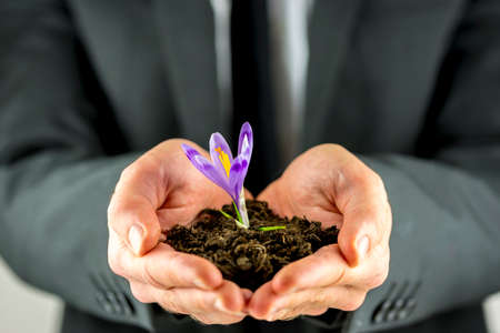 Male hands cupping a pile of fresh organic soil with a purple spring freesia sprouting from the top in a conceptual image of awareness and responsibility in protecting nature and the planet. photo
