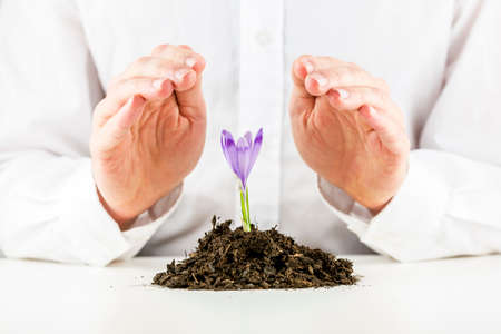 Man protecting a beautiful delicate purple spring freesia flower with his cupped hands as it sprouts in a mound of rich organic earth in a conceptual image. photo