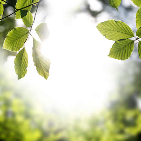 forest products: Frame of fresh green spring leaves with sun flare and central copyspace symbolic of the season, square format.