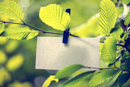 Blank white note paper hanging in between green leaves on a sunlit tree attached to the twig by a clothes peg