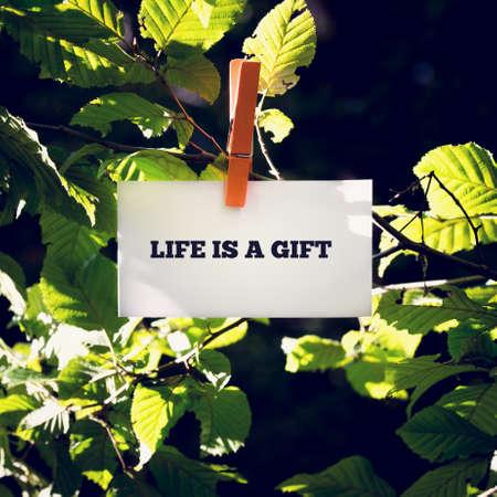 agradecimiento: La vida es un mensaje de inspiración y de motivación Regalo escrito a mano en una tarjeta blanca o signo colgando de una pinza de ropa de una rama frondosa verde al aire libre.