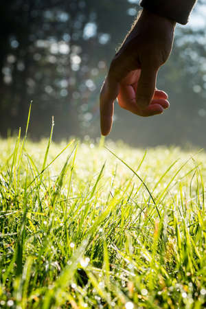 Hand of a man reaching down with his finger to gently touch fresh green grass backlit by the sun in a country meadow in a conceptual image. photo