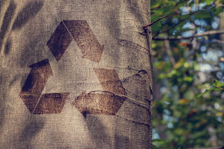 reprocess: Recycling symbol on the trunk of a tree outdoors in woodland in a conceptual image of re-use, recycling, conservation and preservation.