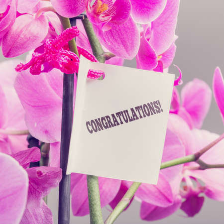 kudos: Congratulations note with a floral bouquet of luxury fresh pink phalaenopsis orchids congratulating someone on an achievement, fulfillment, or success.