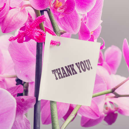 you are special: Bouquet of fresh pink phalaenopsis orchids with a Thank You note expressing appreciation for a service or gift, close up square format view.