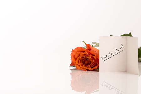 acknowledgment: Attractive Orange Rose Besides Small Thank You Greeting Card Isolated on White.