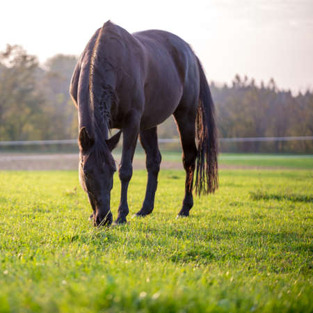 formats: Horse grazing in a lush green meadow in square format.