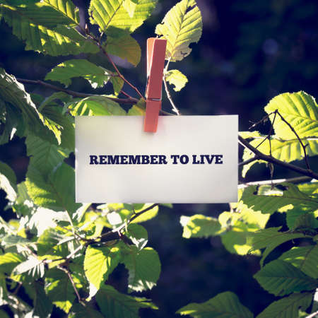 clothes peg: Remember to live inspirational message written on a card attached to a green leafy branch with a wooden clothes peg in sunlight with flare effect.