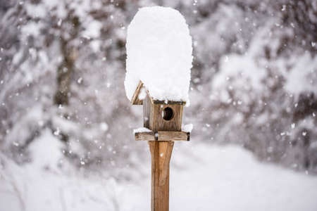 bird feeder: Wooden bird feeder with a tall cap of snow standing in a winter garden with snow-covered trees and falling snowflakes in a winter season or weather concept.