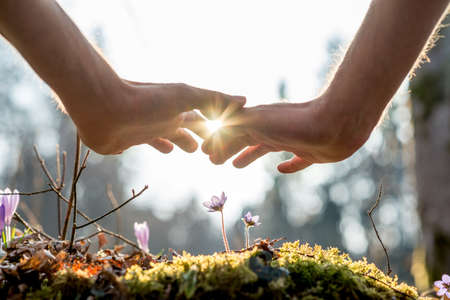 Close up Bare Hand of a Man Covering Small Flowers at the Garden with Sunlight Between Fingers. Imagens