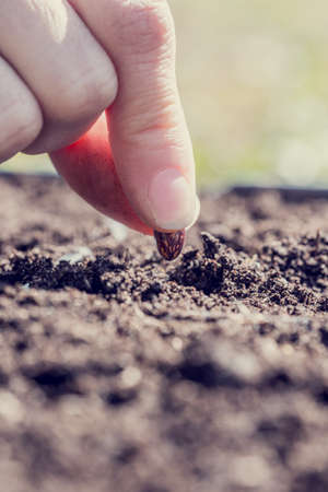 new filter: Close up of the fingers of a person planting a bean seed in the ground conceptual of business startup and the season of germination and new growth. Retro style effect.