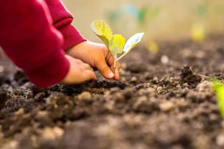 the conceptual: Person transplanting a fresh green young seedling into the ground conceptual of spring, gardening and plant or crop cultivation, low angle view of the hands and plant. Stock Photo