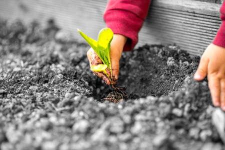 Gekleurde handen van een kind met rode mouwen planten van een kleine plant met groene bladeren in contrast met de grijze vervuilde bodem en milieu. Stockfoto - 40699128