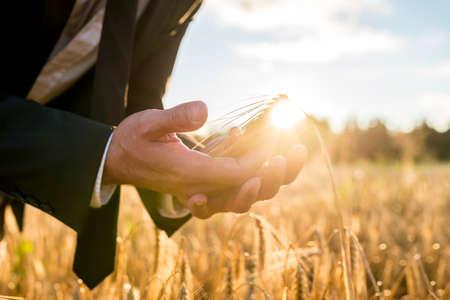 crecimiento planta: Empresario ahuecando una oreja madura de trigo en sus manos la celebraci�n en frente de la esfera de fuego del sol naciente de la ma�ana en una imagen conceptual, de cerca de las manos. Foto de archivo