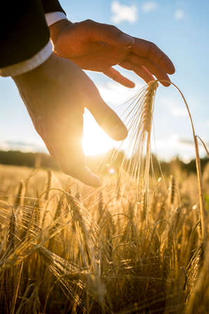 Businessman cupping the rising sun and an ear of golden wheat in his hands above a rural field of ripening wheat in a conceptual image.