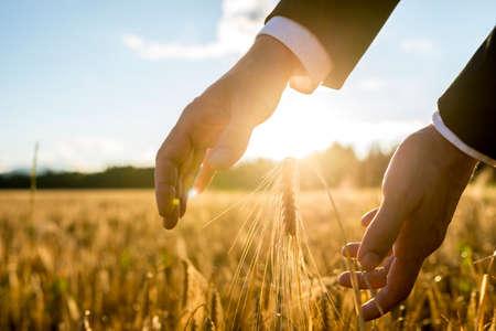 Zakenman die zijn handen rond een oor van tarwe in een agrarisch gebied verlicht door de warme gloed van de rijzende zon tussen zijn handen, geschikt voor het bedrijfsleven, het leven en welvaart concepten.