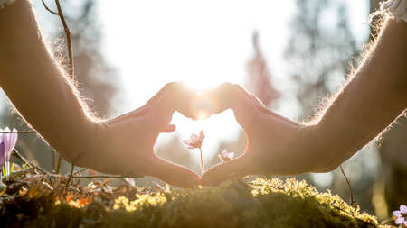 forming: Conceptual Human Hands Forming Heart Shape Around Small Flower Growing on Grassy Ground Against Blurry Trees and Sunlight.