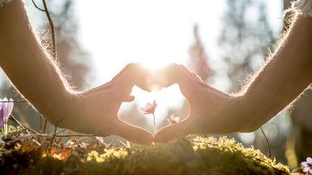 Human Hands Conceptuel Formage Coeur Autour Petite Fleur croissante sur Grassy sol contre les arbres Blurry et Lumière du soleil. Banque d'images