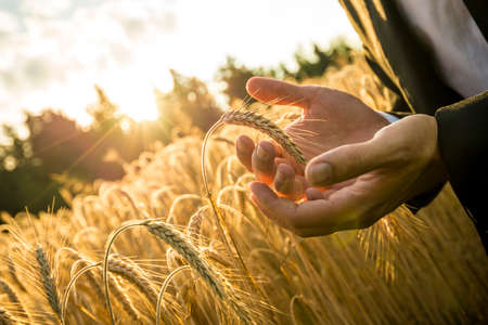 Closeup of hands of businessman cupping a ripe ear of wheat in holding it in front of the fiery orb of the rising morning sun in a conceptual image for business inspiration and start up. Stockfoto