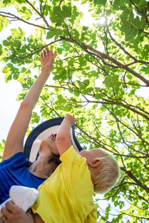feigenbaum: Gl�ckliche junge Mutter, die Natur erkunden mit ihrem Baby zeigt ihm Obst Bild auf sch�nen belaubten gr�nen Feigenbaum an einem sonnigen Sommertag. Lizenzfreie Bilder