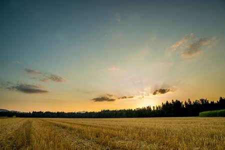 medioambiente: Panorama Vista de una pac�fica Abrir Campo Verde Bajo Luz Azul Gris Cielo Durante Sunset Time.