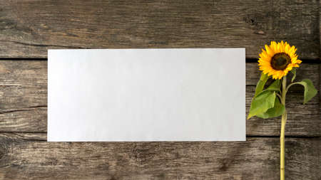 occasion: Blank white card or sheet of  paper with copyspace for your text on old textured rustic wooden planks and beautiful blooming sunflower on the right side.