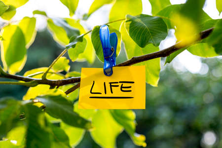 vivacious: Beautiful vivacious life concept - yellow paper with LIFE sign hanging from a green tree.
