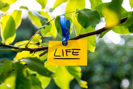 paz interior: Hermosa concepto de vida vivaz - papel amarillo con el signo de la VIDA que cuelga de un árbol frondoso. Foto de archivo