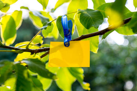 commercial tree service: Yellow paper card hanging from a fresh green tree branch in a conceptual image. Stock Photo