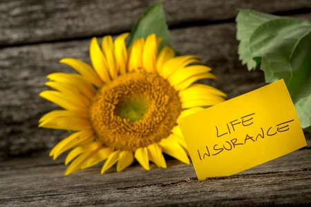 Concetto di assicurazione vita con un colorato giallo brillante Helianthus girasole su una panca di legno con una carta scritta a mano - assicurazione sulla vita - a fianco.