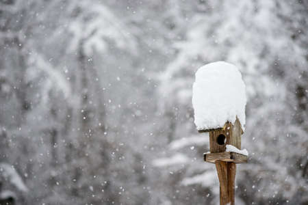 heaped: Small wooden bird feeder with a hat of heaped fresh white winter snow and falling snow flakes.