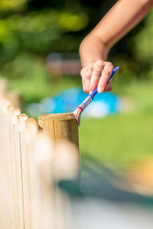 treated board: Woman varnishing a wooden fence outdoors in a home patio protecting it with transparent varnish. Stock Photo
