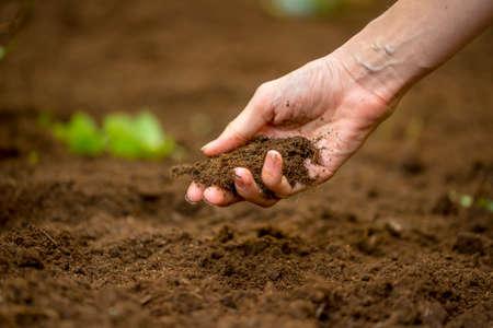 Close-up van de hand van een vrouw met een handvol rijke vruchtbare grond die is nieuw gegraven over of bewerkt in een concept van het behoud van de natuur en de landbouw of tuinieren. Stockfoto