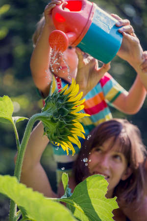 primal: Young mother holding her toddler on shoulders as he waters a beautiful blooming sunflower with toy watering can. Conceptual image of life, purity and connection with nature, focus to the flower.