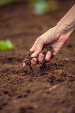 Vrouwelijke hand houden van een handvol rijke vruchtbare grond die nieuw is gegraven over of bewerkt in een concept van het behoud van de natuur en de landbouw. Wazig beweging van de bodem op de grond valt.