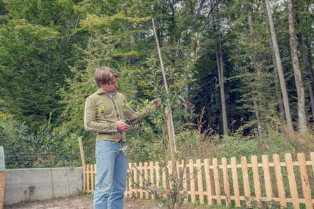 tree trimming: Retro style image of young man standing pruning a tree in the garden with a pair of secateurs or shears in a gardening and yard maintenance concept. Stock Photo