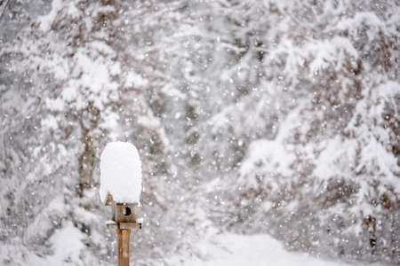 bird feeder: Beautiful winter scene - wooden bird feeder with a tall cap of snow standing in a winter garden with snowy trees and snowflakes falling.