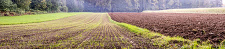 agricultural area: Beautiful panorama view of agricultural area with young seedling sprouting in one field and fertile soil resting in another. Stock Photo