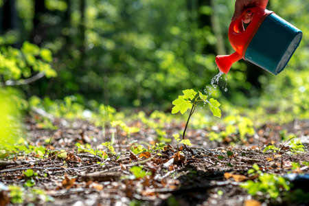 conservationist: Closeup of male hand watering a young plant in the middle of forested area with an orange toy can. Conceptual of nature preservation and care.