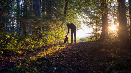 pat down: Man bending down to pet his black dog as they enjoy a beautiful nature in a glade in the woods backlit by the warm glow of the early morning sun.