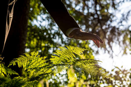 environmental concern: Low angle view of businessman holding his hand over a young green fern in the middle of woods lit by a beautiful sunlight. Conceptual of ecology and environmental awareness.