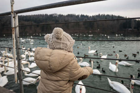 cygnet: Toddler boy standing next to a fence by the lake looking large group of swans and ducks floating on water.