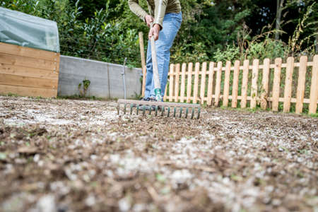 yard work: Low angle view of a man doing yard work raking the ground with a pronged metal rake. Stock Photo