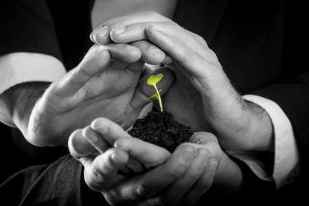 growing business: Female hands holding fertile soil from which a green sprout is growing and male hands making protective gesture above it. Conceptual of protection, teamwork and business start up.