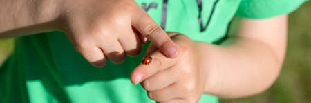 babies hands: Close up on hands of unidentifiable child in green shirt holding red ladybug as it crawls on a finger. Stock Photo