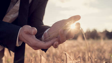 businesspeople: Cupped hands of a business man in a suit standing in a wheat field with a bright morning sunburst shining between his fingers in a close up conceptual view.
