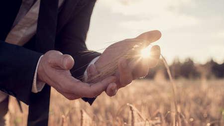 armonia: manos ahuecadas de un hombre de negocios en un juego que se coloca en un campo de trigo con un sol brillante de la mañana brillando entre sus dedos en una vista conceptual de cerca.